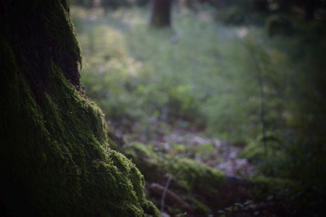 Auf der Suche nach dem Pilz 7
